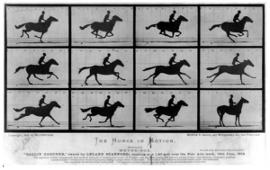 "Abb. 2: Muybridge, Eadweard: The Horse in Motion.""Sallie Gardner,"" owned by Leland Stanford; running at a 1:40 gait over the Palo Alto track, 19th June 187."